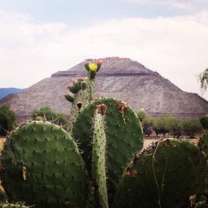 tunas teotihuacan