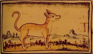 Xoloitzcuintle dog