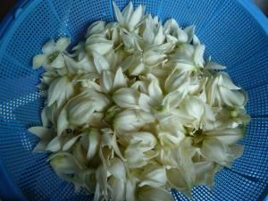 yucca flower petals