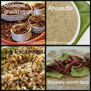 Mexican edible insects
