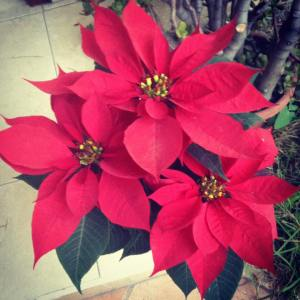 10 things you didn't know about Christmas in Mexico