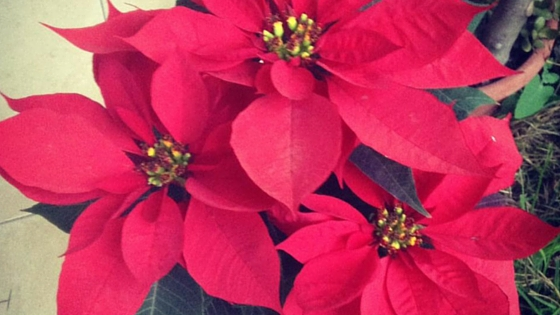 10 Jolly Secrets You Didn't Know About MexicanChristmas