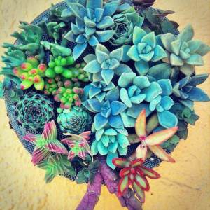The Best Mexican Succulents For A Spectacular Home Garden | My Heart Of Mexico