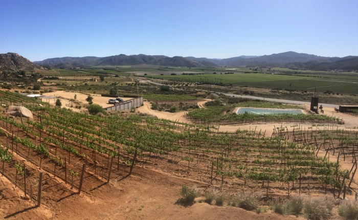 My tips to crossing la frontera-favorite things to do in Tijuana and Valle de Guadalupe.