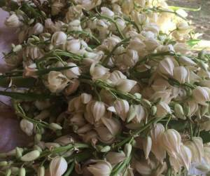 A Quick and Easy Way to Cook Yucca Flowers | My Heart of Mexico